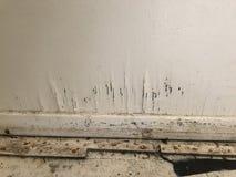 Formen Sie das Wachsen auf Wand nach Hurrikan harvey Überschwemmung Lizenzfreies Stockbild