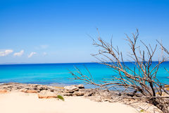 Formentera Escalo beach with dried branches Royalty Free Stock Photos
