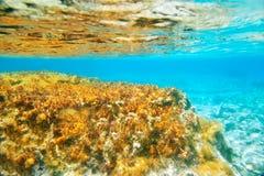 Formentera Ibiza υποβρύχιο seascape anemone Στοκ φωτογραφίες με δικαίωμα ελεύθερης χρήσης