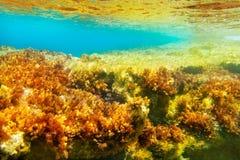 Formentera Ibiza υποβρύχιο seascape anemone Στοκ Εικόνες