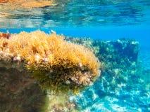 Formentera Ibiza υποβρύχιο seascape anemone Στοκ Εικόνα