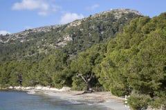Formentor Beach; Majorca. Formentor Beach in Majorca; Spain Royalty Free Stock Photography