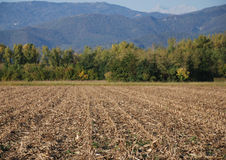 Former Corn Field in Autumn Royalty Free Stock Image