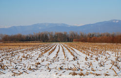 Former Corn Field in the Snow Royalty Free Stock Photos