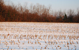 Former Corn Field in Snow Stock Photo
