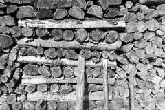 Former för textur för träjournalvedträn Royaltyfri Bild