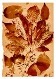 Formes de feuille sur le vieux papier Image libre de droits