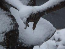 Formes de glaçon sur la branche couverte de neige Photos stock