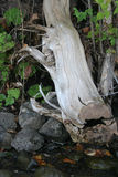 Formes de Shoreline Photographie stock libre de droits