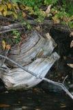 Formes de Shoreline Photos libres de droits