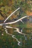 Formes de Shoreline Photo libre de droits