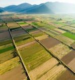 Formes géométriques abstraites des colis agricoles de différentes cultures dans des couleurs vertes et jaunes Dessus aérien en ba images stock
