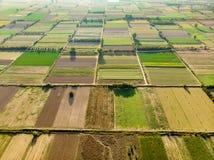 Formes géométriques abstraites des colis agricoles de différentes cultures dans des couleurs vertes et jaunes Dessus aérien en ba image libre de droits