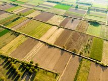 Formes géométriques abstraites des colis agricoles de différentes cultures dans des couleurs vertes et jaunes Dessus aérien en ba photos libres de droits