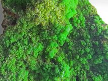 Formes normales Minerais et textures et milieux semi-précieux de pierres Image libre de droits