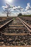 formez la voie avec l'arbre sec à la gauche et à la plantation de la canne à sucre vers la droite avec le parement du soleil image stock