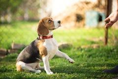 Formez un chien pour te donner sa patte image libre de droits