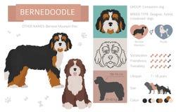 Formgivare korsning, hybrid- blandninghundkapplöpningsamling som isoleras på vit Plan stilclipartuppsättning stock illustrationer