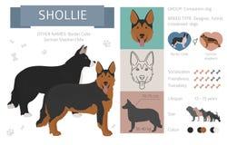 Formgivare korsning, hybrid- blandninghundkappl?pningsamling som isoleras p? vit Plan stilclipartupps?ttning royaltyfri illustrationer