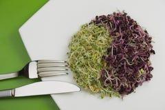 formi il yin viola del yang di verde fresco del germe Immagini Stock