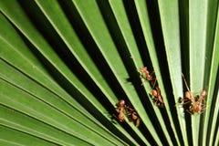 Formica & palma Immagini Stock Libere da Diritti