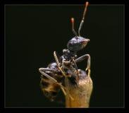 Formica entro la notte Immagini Stock Libere da Diritti