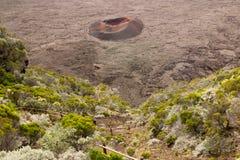 Formica- Lejonet i La Réunion Royaltyfri Bild