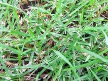 Formica nell'erba Fotografia Stock Libera da Diritti