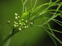 Formica su una pianta Immagini Stock Libere da Diritti