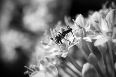 Formica sulla fine del fiore su Fotografia Stock Libera da Diritti
