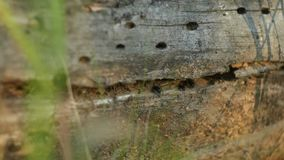 Formicaio in albero caduto Foresta calma di estate stock footage