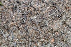 Formicaio della foresta Fotografia Stock Libera da Diritti