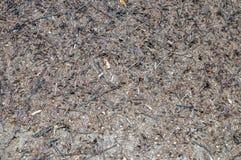 Formicaio della foresta immagini stock
