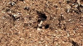 Formiche al loro lasso di tempo del nido archivi video
