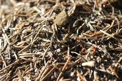 Formiche in anthill Immagini Stock Libere da Diritti