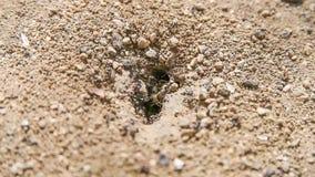 Formiche che costruiscono nido a terra archivi video