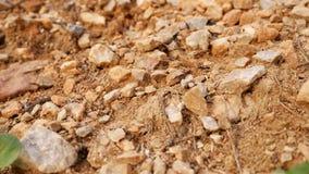 Formiche che lavorano, alimento di trasporto lungo un percorso in pieno delle pietre video d archivio