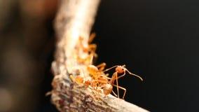 Formiche che scalano sull'albero con luce solare video d archivio