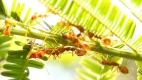 Formiche che scalano sull'albero con luce solare archivi video