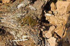 Formiche che scavano in un vecchio albero Fotografia Stock Libera da Diritti