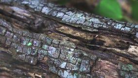 Formiche che strisciano su un ceppo di menzogne archivi video