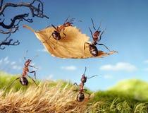 Formiche che volano sulla foglia, racconti della formica Fotografia Stock