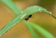 Formiche dopo pioggia #1 fotografia stock libera da diritti