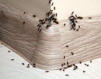 Formiche nella casa immagini stock libere da diritti