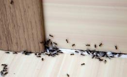 Formiche nella casa fotografia stock libera da diritti
