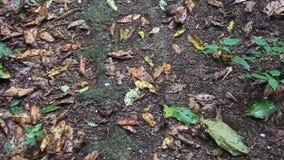 Formiche nella foresta della nuvola stock footage