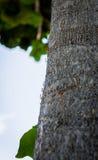 Formiche nere che strisciano su un tronco di albero Immagini Stock