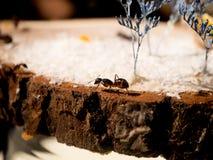 formiche su un taglio di legno Fotografia Stock