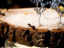 formiche su un taglio di legno Fotografia Stock Libera da Diritti