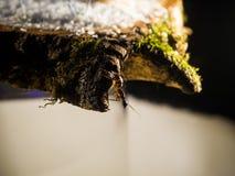 formiche su un taglio di legno Immagini Stock